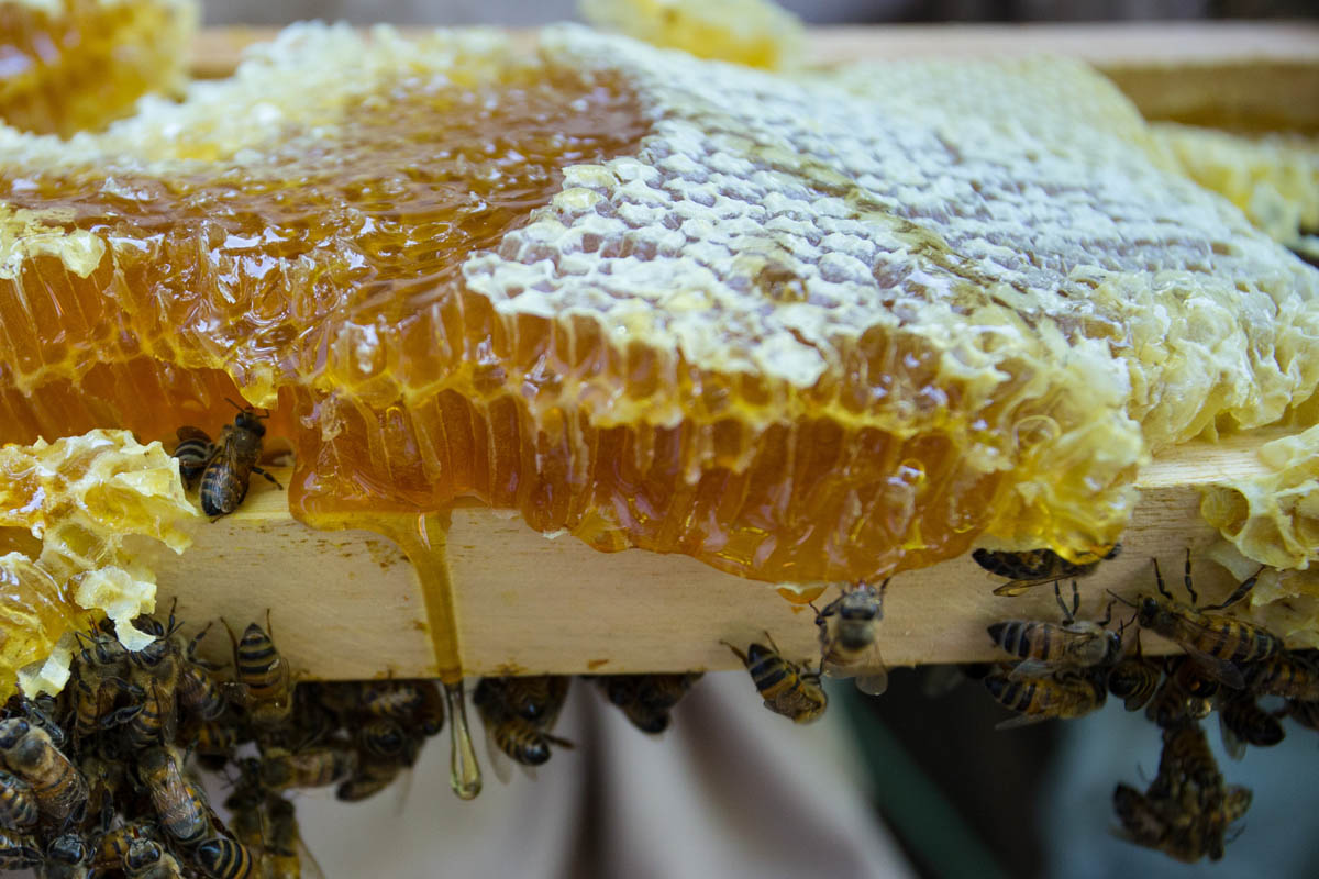 miel, abejas, mercados, China,