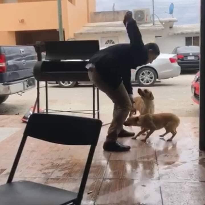 Perro, Piedras Negras
