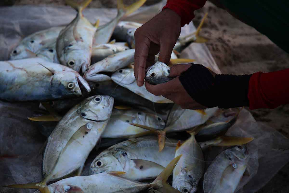 pescado, cuaresma