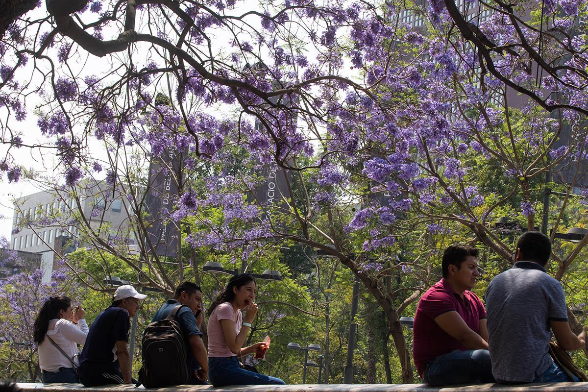 Primavera, Calor, alergias, Jacarandas,