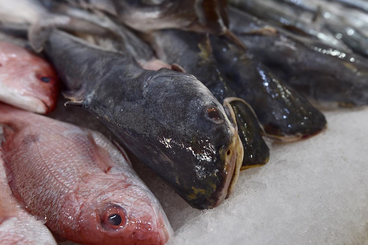 """Pescados, """"Gato X Liebre"""" , organización Oceana, venta, restaurantes, Marlin, huachinango,"""