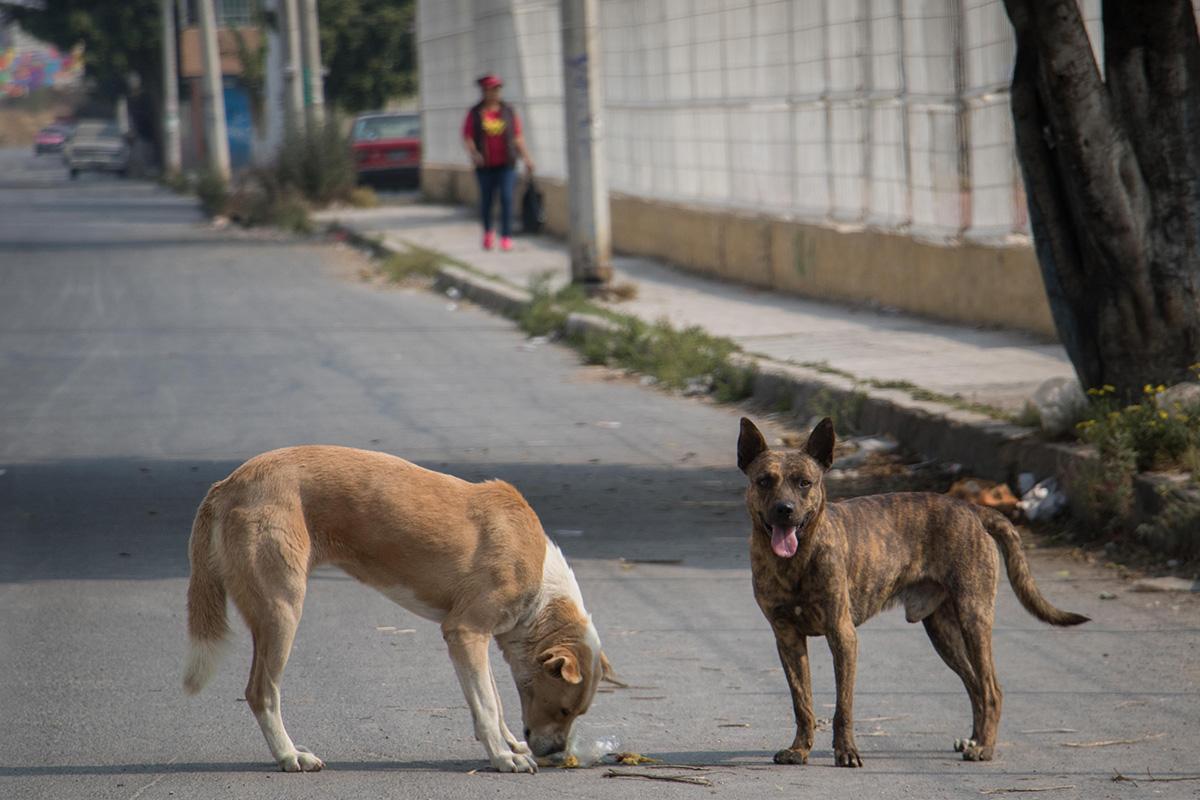 perros, gatos, pulgas, bacterias, mascotas,