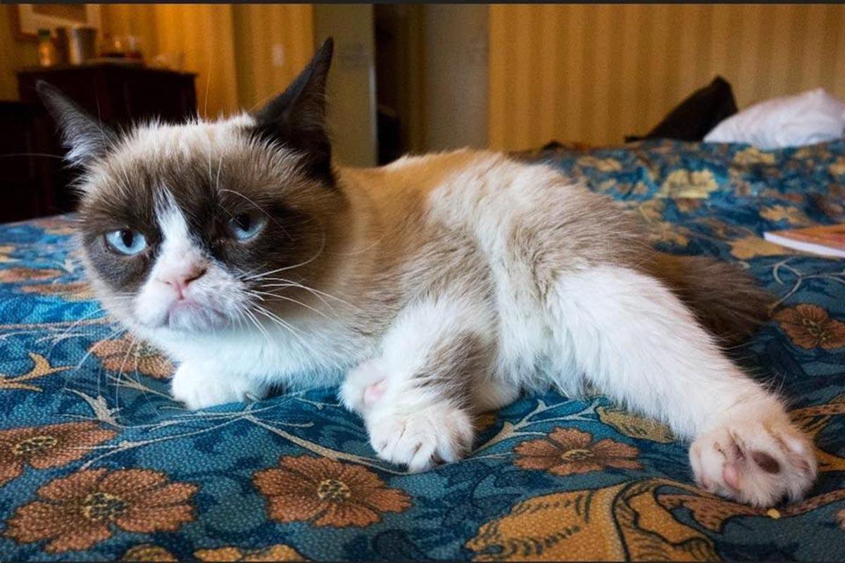 Grumpy cat, virales, gato, memes