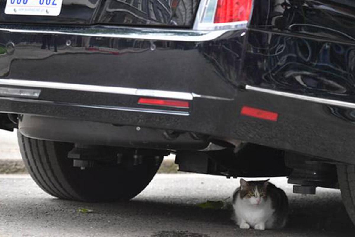 Gato, Larry, La Bestia, Reino Unido, Downing Street,