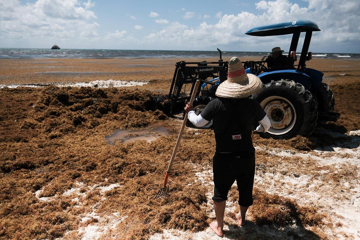 Sargazo, Quintana Roo, Playa del Carmen,