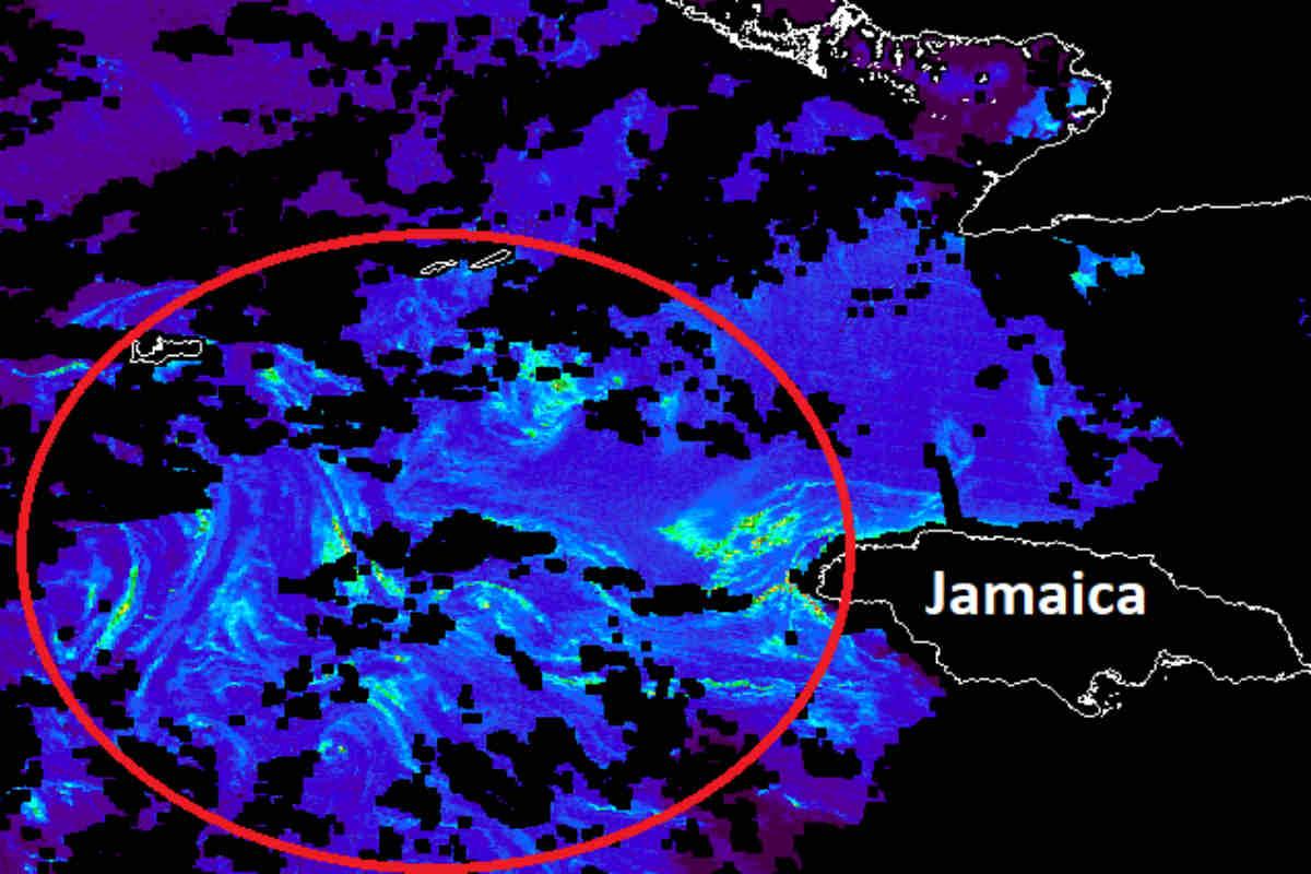Fuente: Red de Monitoreo del Sargazo Cancún