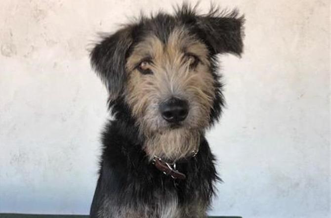 """""""Monte"""" es el nuevo perro estrella de Disney/Foto: EFE"""