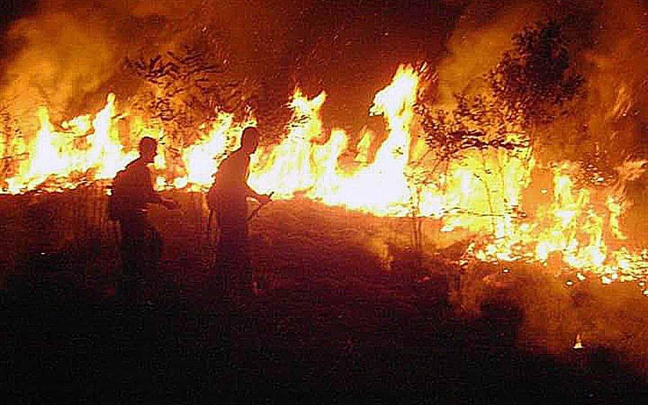Amazonía, Amazonas, incendio, Brasil,