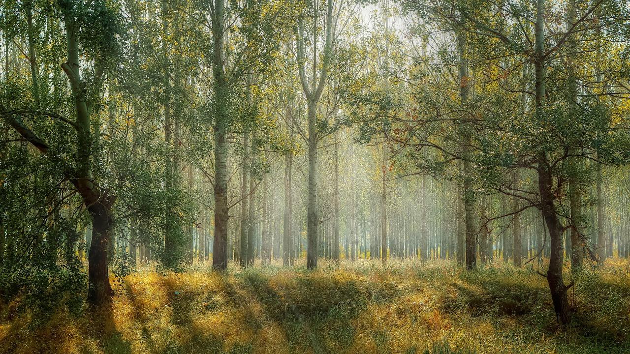 Bosque, árboles, cambio climático