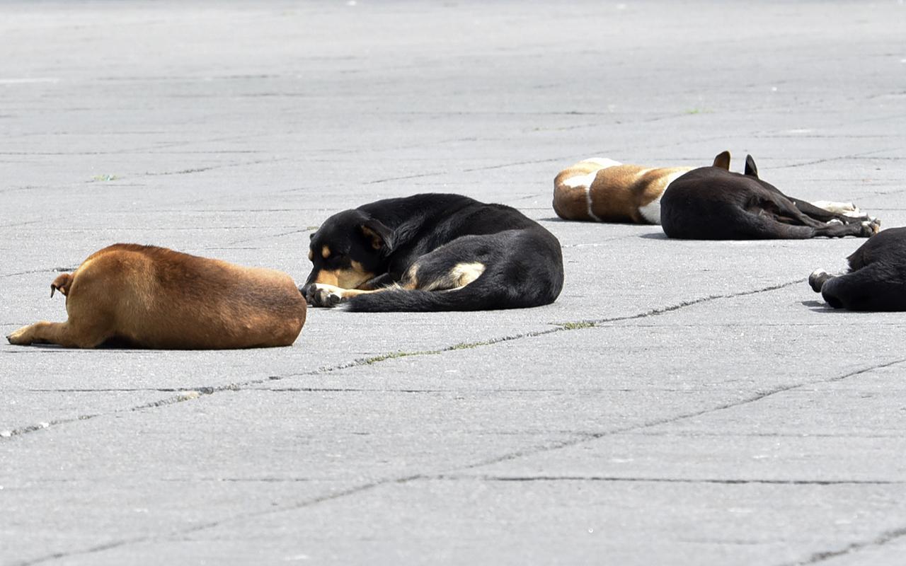 perros, Metro, adopción,