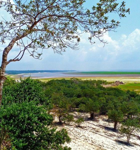 La selva está en grave riesgo. Foto: Pixabay