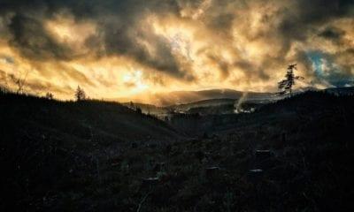 Amazonia, deforestación, selva, ecología,