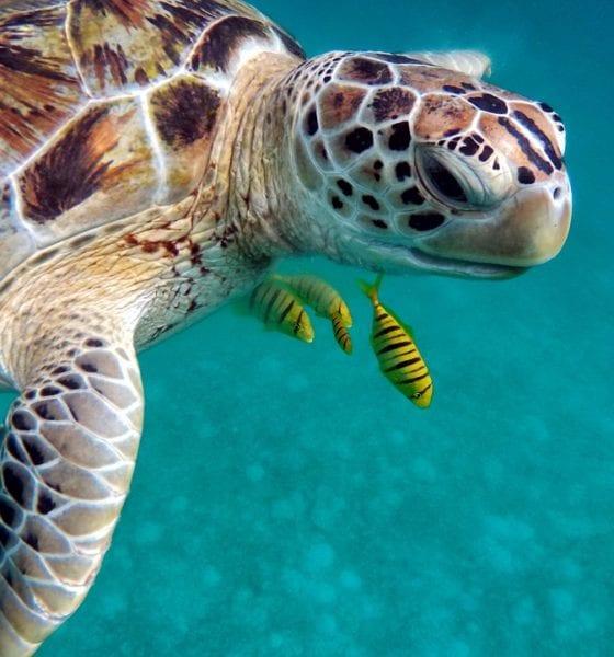 Las tortugas son muy cotizadas en el mercado negro. Foto: Pixabay