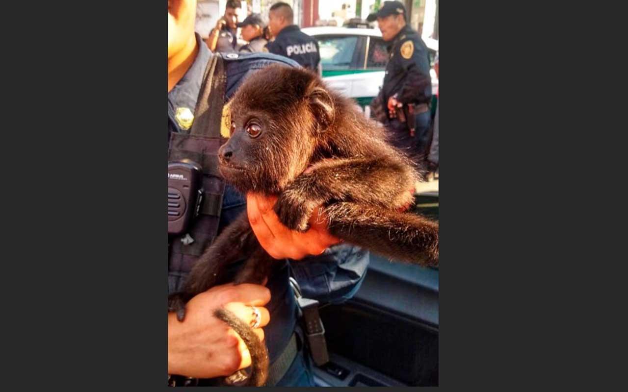 Rescatan en CDMX a 3 animales en peligro de extinción