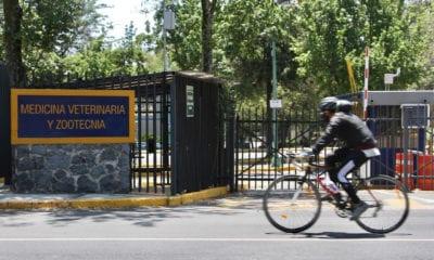 UNAM no regresa a clases mientras el semáforo epidemiológico esté en rojo