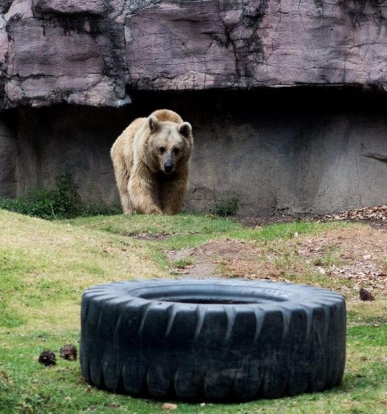 Por Covid 19, en riesgo 200 mil animales que viven en zoológicos del país