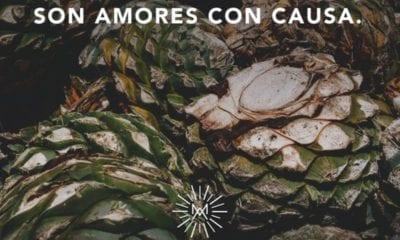 mezcal amores con causa