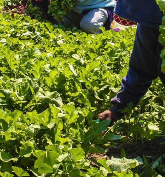 Gobierno anulará el uso de Glifosato en labores de agronomía