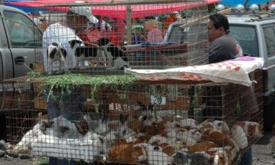 CDMX prohíbe la venta de animales en tianguis y mercados