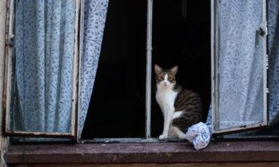 ¿Por qué los gatos aman las cajas?