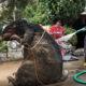 Encuentran rata gigante en drenaje de la Ciudad de México