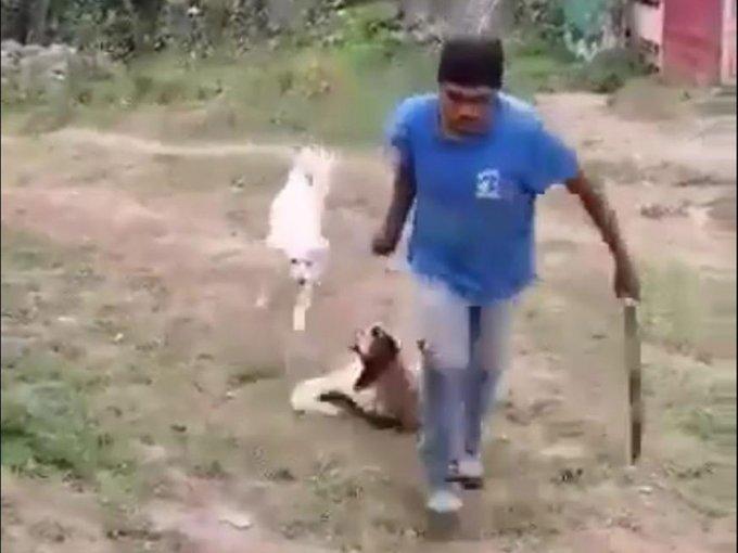 Sujeto agrede a perrita a machetazos. Foto: Twitter