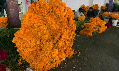 Reportan bajas ventas de flor de cempasúchil en CDMX