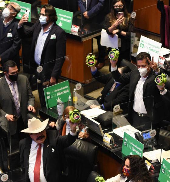 Senado dio un paso en falso en su aval a la marihuana: UNPF
