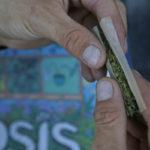 Consommation de marijuana