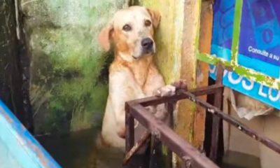 perro, inundaciones, tabasco