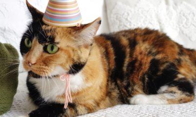 Festejan cumpleaños de gato y se contagian de Covid. Foto: Twitter