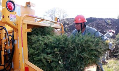 Convierten árboles de navidad en juguetes de madera