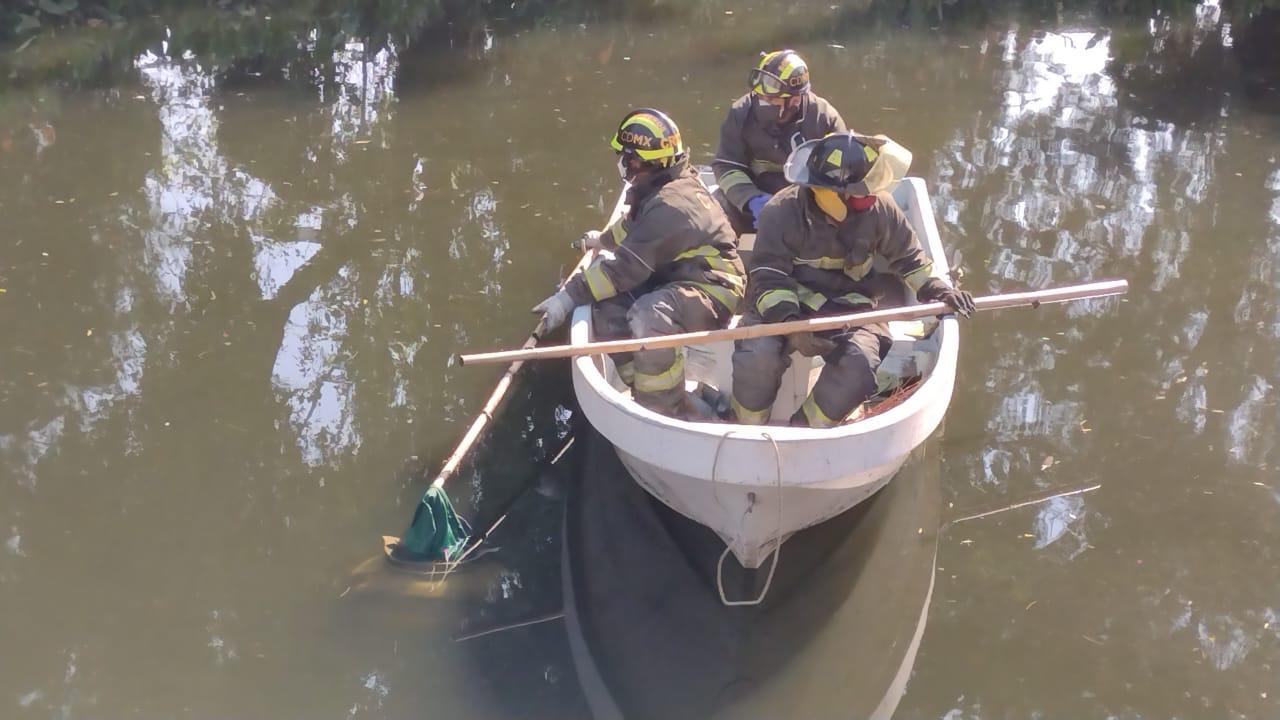 Buscan a hombre que cayó en Canal Nacional. Foto: Israel Lorenzana