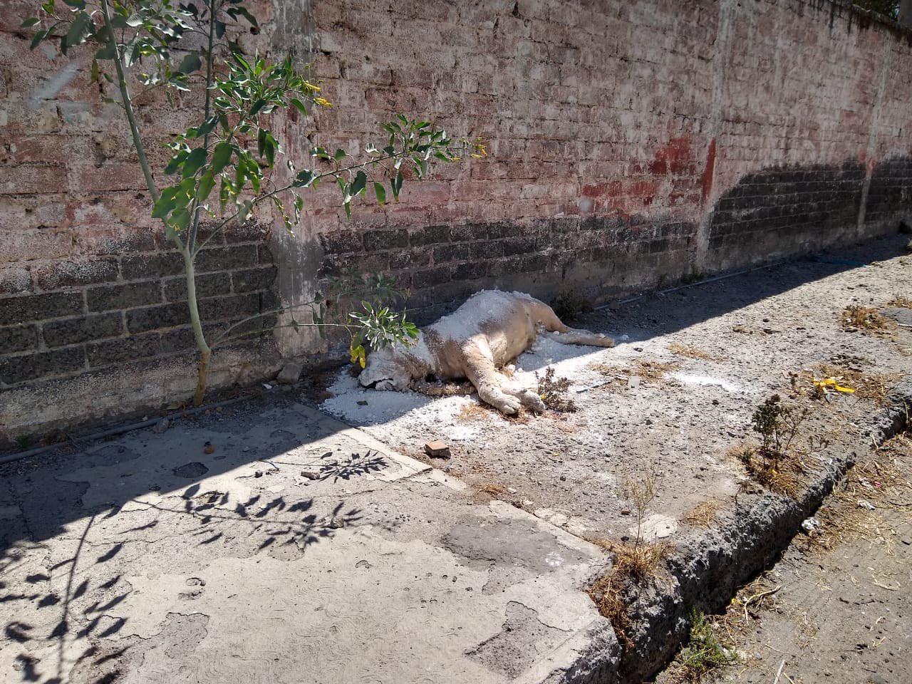Localizan cuerpo de León en Iztapalapa. Foto: Israel Lorenzana