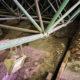 Descartan daños mayores en Templo Mayor tras granizada