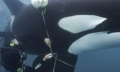 Secretos de las ballenas
