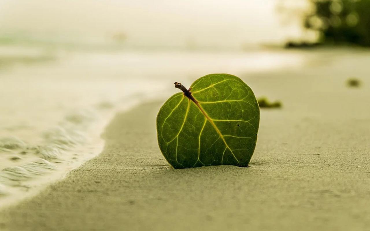 Día de la Tierra: tips para ayudar al planeta todos los días