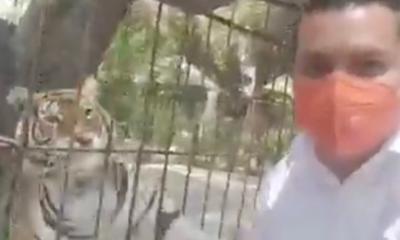Tigre ataca a candidato de MC cuando grababa un spot en Puebla