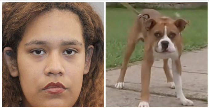 Mujer le dispara a perro y hiere a su hijo. Foto: Especial
