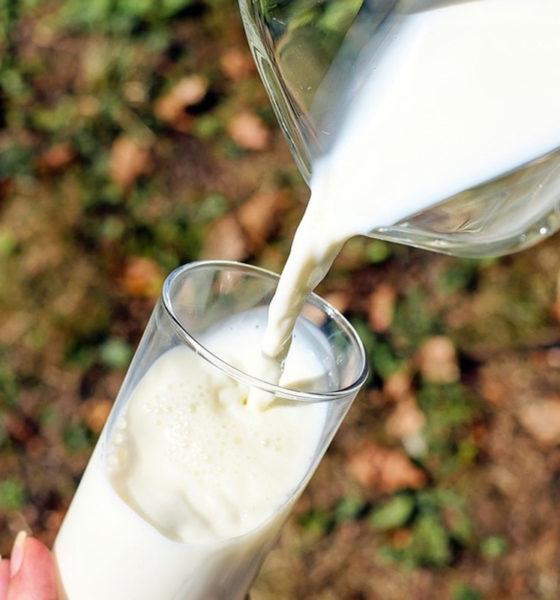 Por este motivo, la leche no engorda