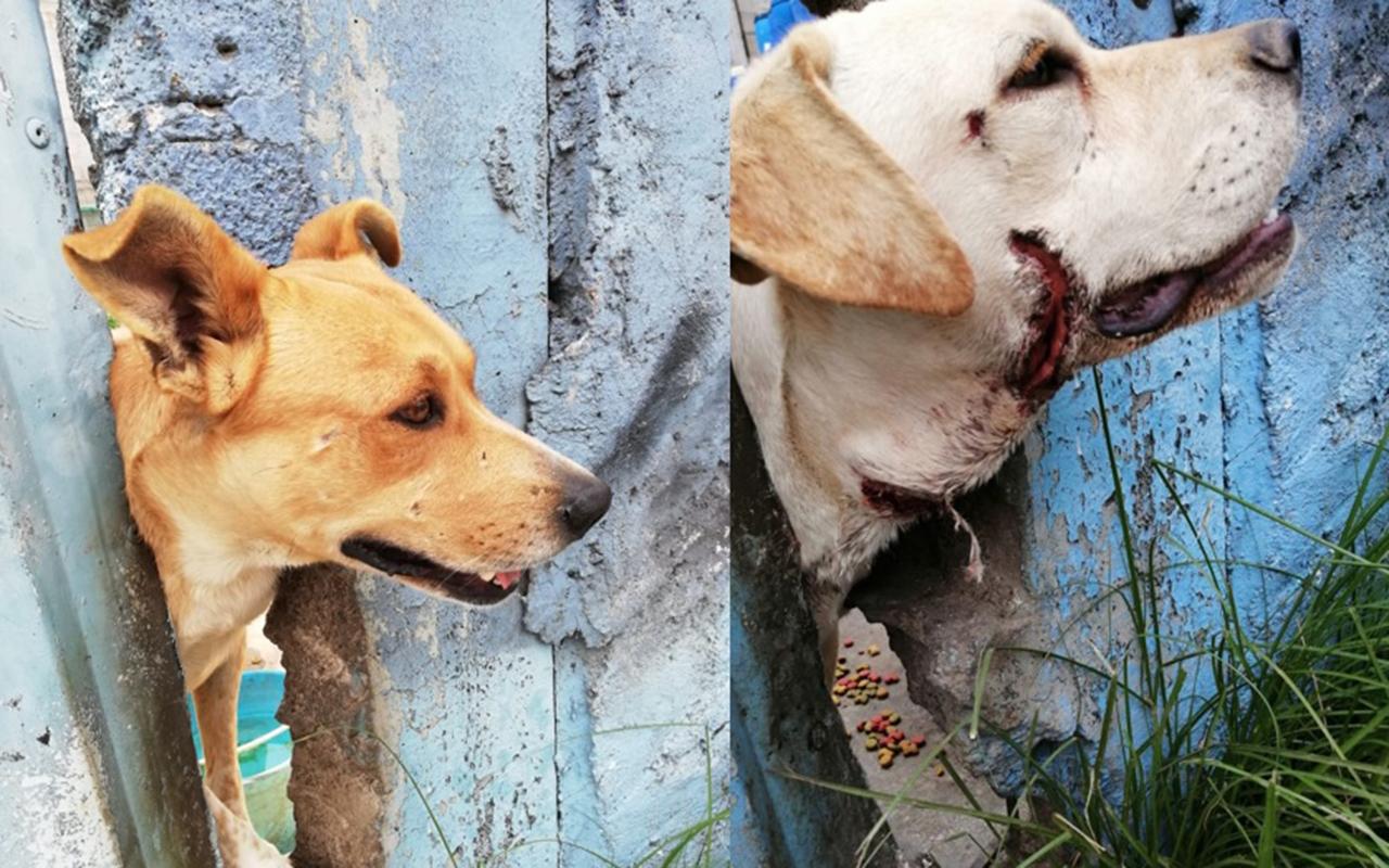 Vecinos alimentan a perros abandonados en predio de Neza