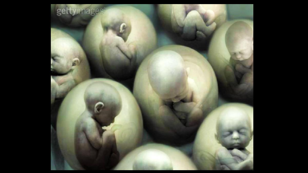veracruz defenderá la vida o el aborto