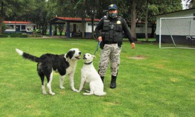 Perros callejeros se ganan el cariño de policías